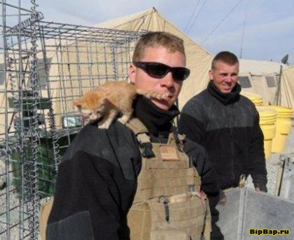 Cats serving in the army